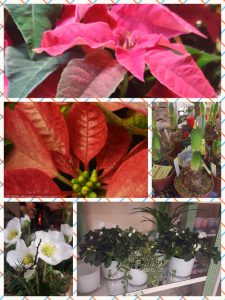 Bunte Blüten auch im Winter